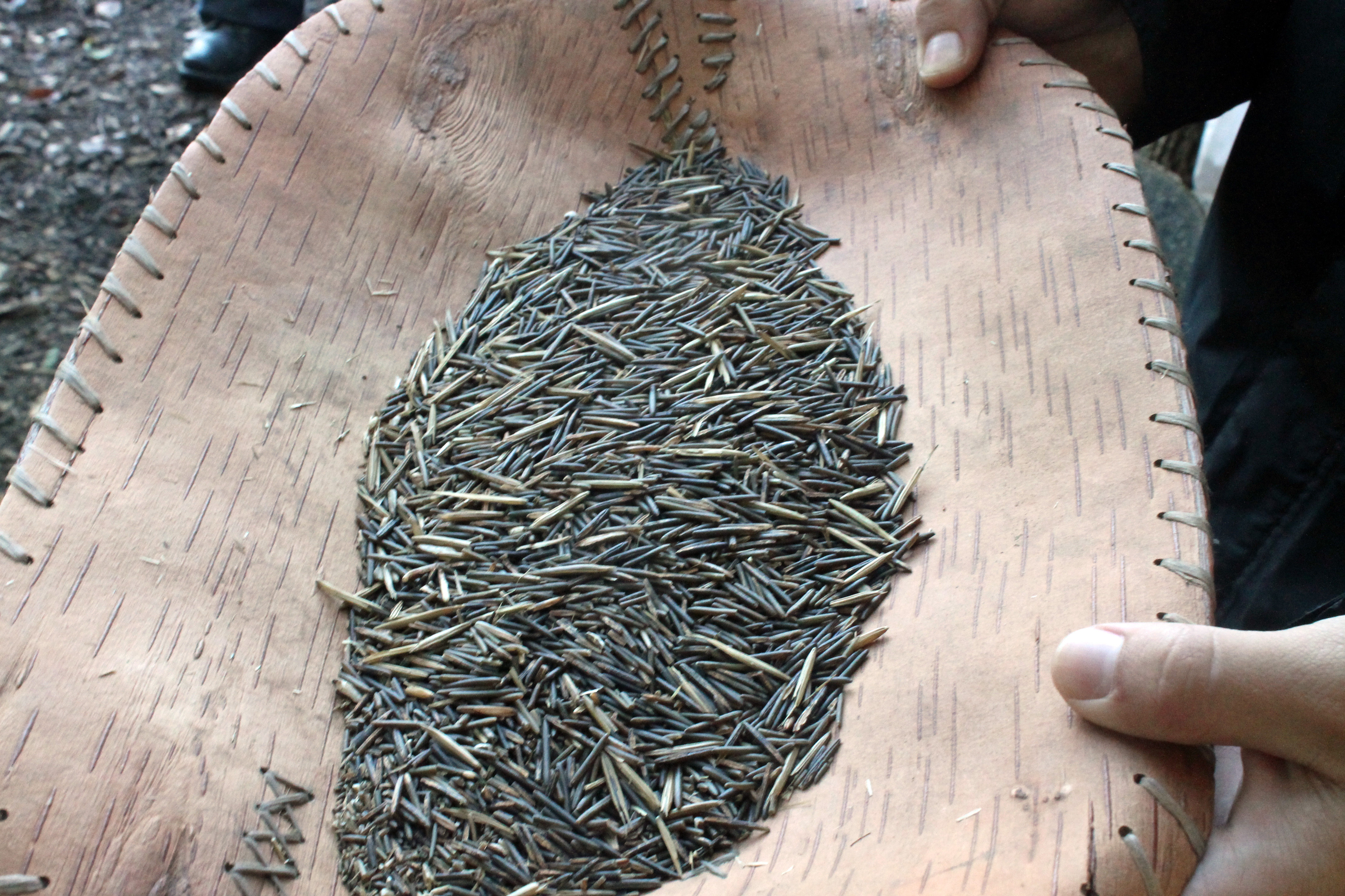 Grains of wild rice are processed in a light brown vessel