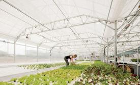 Dahlia Campus greenhouse
