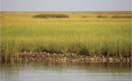 Louisiana's southwest coastal area