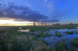 Wetlands-