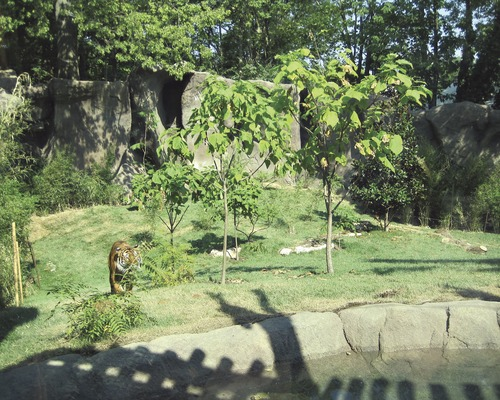 Best Projects Small Project: Cincinnati Zoo U0026 Botanical Garden Cat Canyon