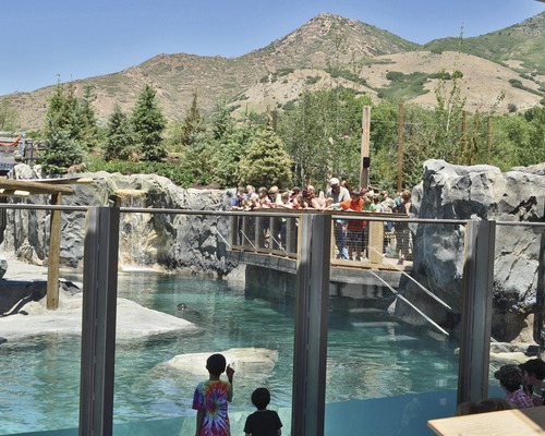 Hogle Zoos New Rocky Shores Exhibit Brings the Bears Back to Town