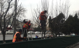 Bejing workers prune trees